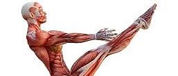 Anatomia dello Yoga-Teoria e pratica
